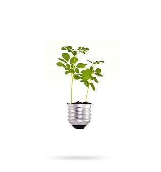 Bulbo com uma planta verde