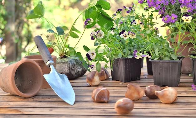 Bulbos de flores em uma mesa de jardim em frente a vasos de flores e morango