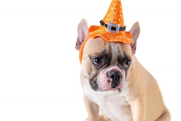 Buldogue francês bonito com chapéu halloween