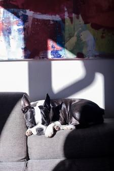 Buldogue francês cachorro dormindo