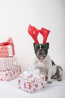 Buldogue francês com chifres de rena, sentado com caixas de presente de natal