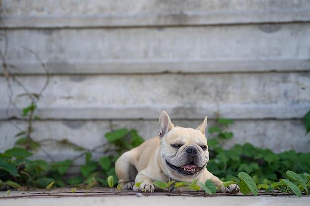 Buldogue francês fofo sentado no jardim