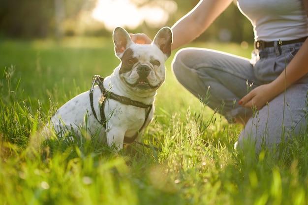 Bulldog francês curtindo o tempo com o proprietário no parque