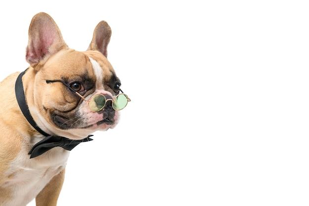 Bulldog francês fofo usa gravata borboleta e óculos isolados no fundo branco, animais de estimação e conceito animal