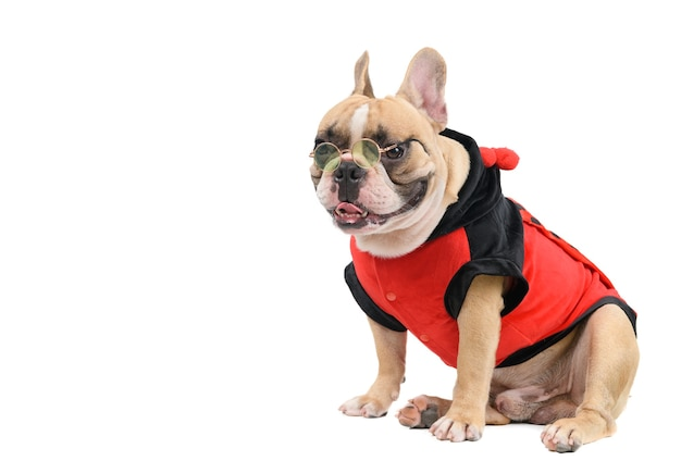 Bulldog francês fofo usa óculos de sol isolados, conceito animal e animal de estimação