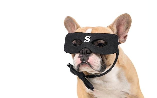 Bulldog francês usa máscara de super-herói isolada no fundo branco, conceito de animal de estimação e animal