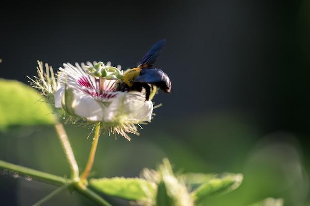 Bumble bee com flores