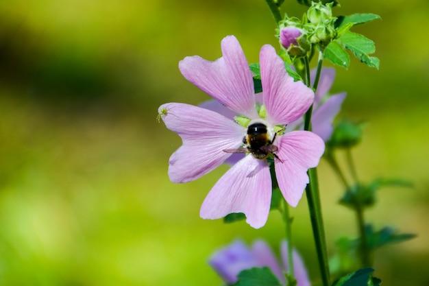 Bumblebee em uma flor e uma aranha. verão.