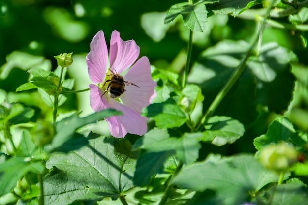 Bumblebee em uma flor.