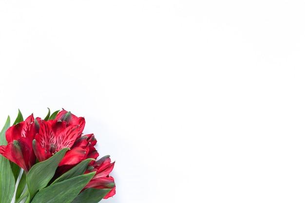 Buquê de alstroemeria flores vermelhas sobre fundo branco