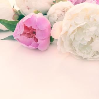 Buquê de close-up de peônias rosa e brancas com espaço de cópia para o projeto.