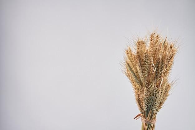 Buquê de espigas de cereais, espigas de centeio de trigo e espaço de cópia