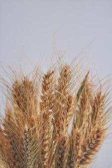 Buquê de espigas de trigo dourado em tiro vertical