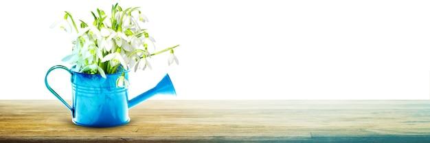 Buquê de floco de neve colorido em um regador. conceito de primavera e jardinagem.