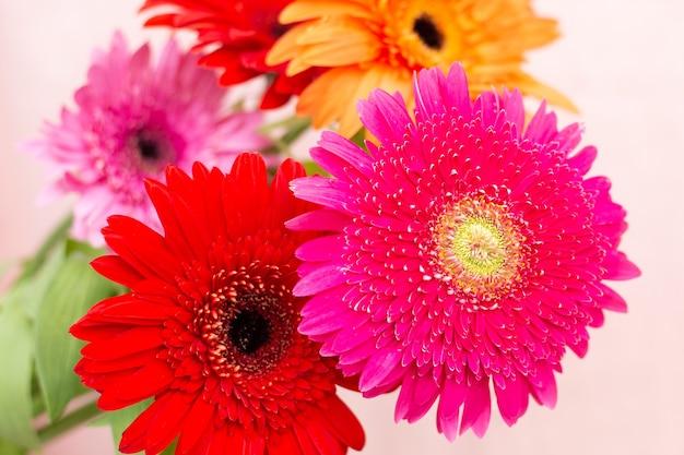 Buquê de flores brilhantes de crisântemos em um fundo claro
