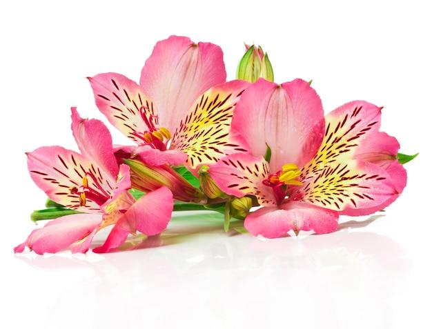 Buquê de flores cor de rosa