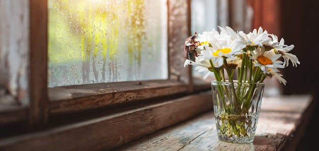 Buquê de flores de camomila em um vaso de vidro em um antigo parapeito de janela de madeira rústica