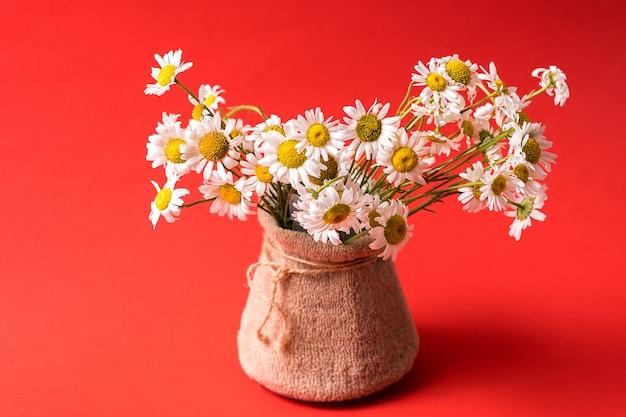 Buquê de flores de camomila no vaso sobre vermelho