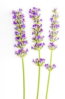 Buquê de flores de lavanda e sementes em fundo branco. isolado no fundo branco.