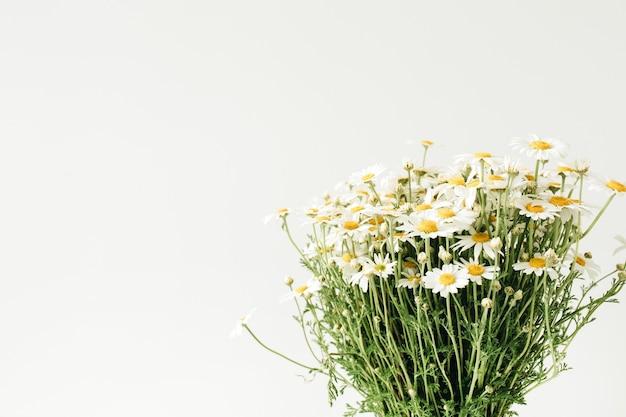Buquê de flores de margarida de camomila em branco.