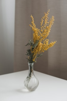 Buquê de flores de mimosa amarela em fundo branco. conceito de primavera
