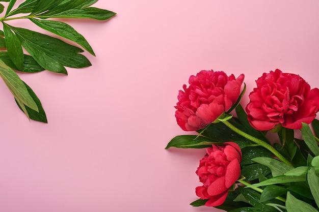 Buquê de flores de peônia vermelha linda sobre fundo rosa, vista superior, cópia espaço, plano-lay. dia dos namorados, plano de fundo do dia das mães.