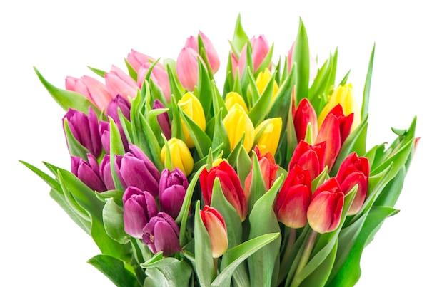 Buquê de flores de tulipas multicoloridas frescas isoladas no fundo branco