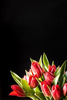 Buquê de flores de tulipas vermelhas closeup e folhas verdes sobre fundo preto, cópia espaço