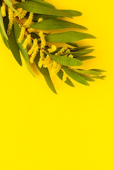 Buquê de flores frescas da primavera amarelo