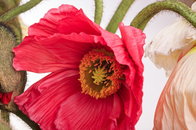 Buquê de flores margarida e papoula