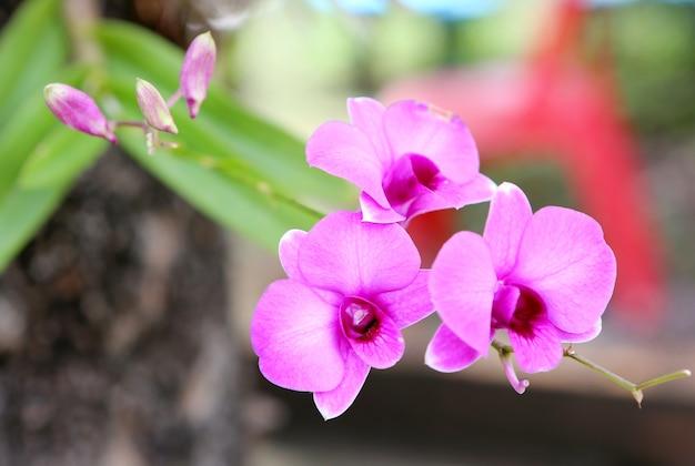 Buquê de flores rosa orquídeas