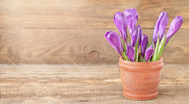 Buquê de flores roxas de açafrão em um vaso de argila marrom no fundo de madeira
