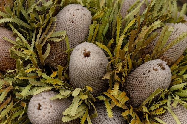 Buquê de flores secas protea, vista superior