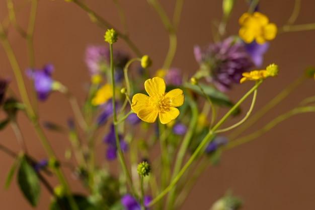 Buquê de flores silvestres em fundo marrom, coleção de plantas medicinais, composição de natureza morta Foto Premium