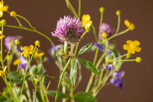 Buquê de flores silvestres em fundo marrom, coleção de plantas medicinais, composição de natureza morta