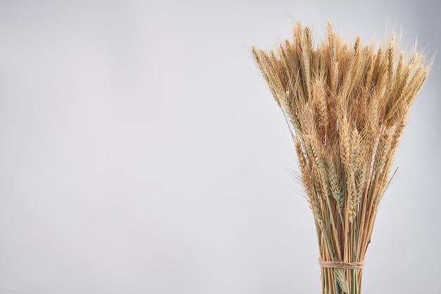 Buquê de grãos de cereal de centeio e trigo seco e espaço de cópia