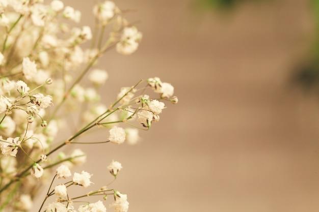 Buquê de gypsophila branco, flores de respiração do bebê fechar