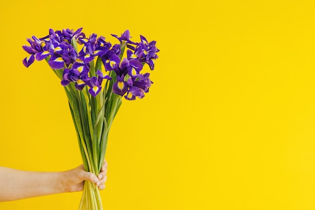 Buquê de íris em fundo amarelo na mão feriado dia das mães dia das mulheres fundo cópia espaço