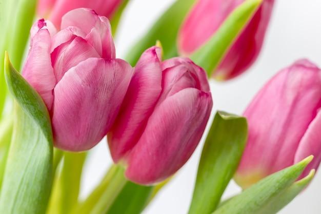 Buquê de lindas tulipas cor de rosa com folhas e caules verdes. ternas flores da primavera como um presente para o feriado. foco seletivo
