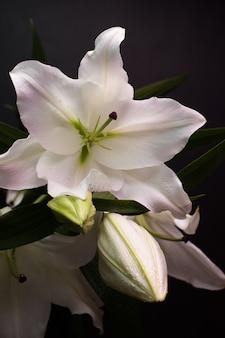 Buquê de lírios em flor em um fundo escuro