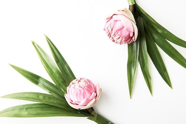 Buquê de lótus rosa