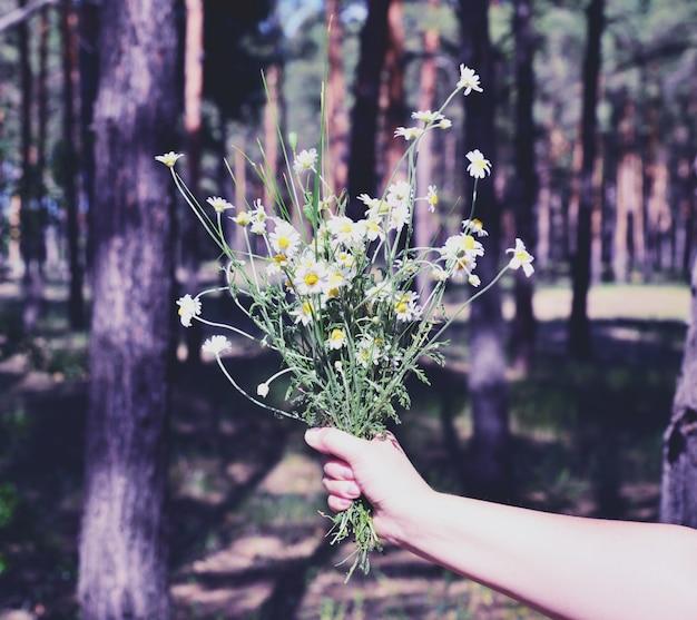 Buquê de margaridas brancas em flor em uma mão feminina