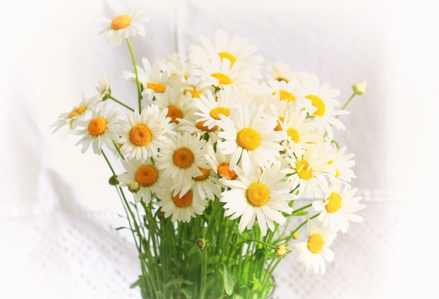 Buquê de margaridas em um fundo branco composição de primavera