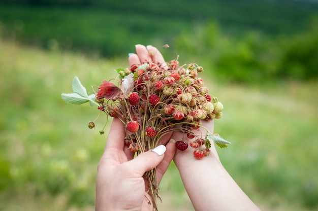 Buquê de morangos silvestres em mãos femininas