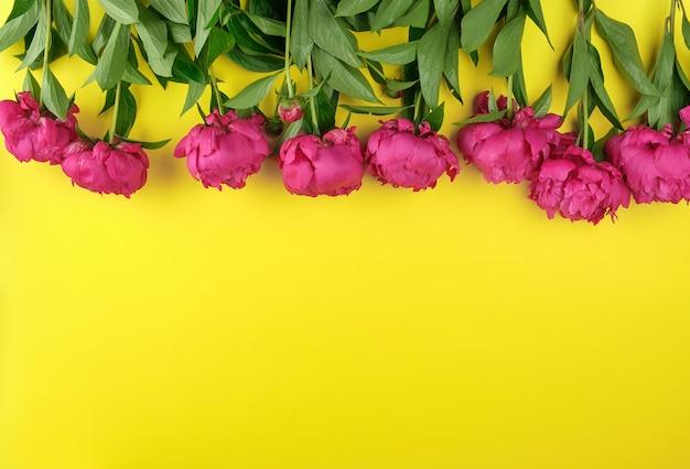 Buquê de peônias vermelhas com folhas verdes em um fundo amarelo