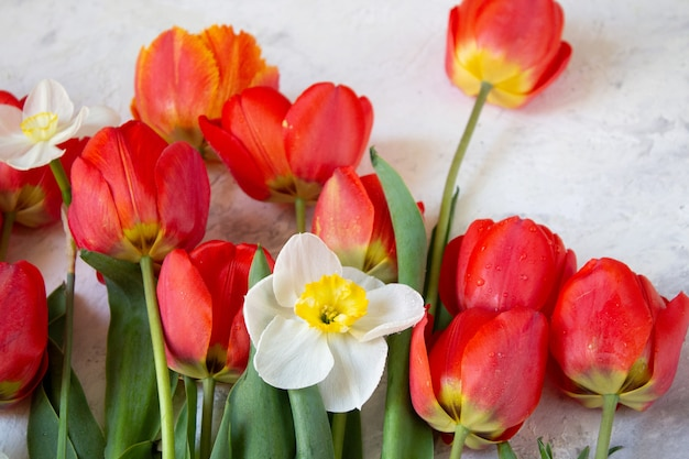 Buquê de primavera flor de tulipas vermelhas