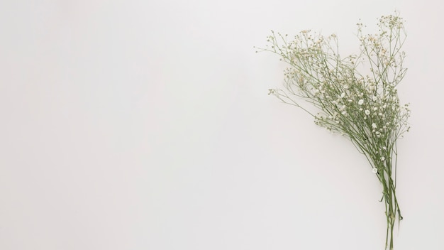 Buquê de ramos de plantas verdes finas com flores
