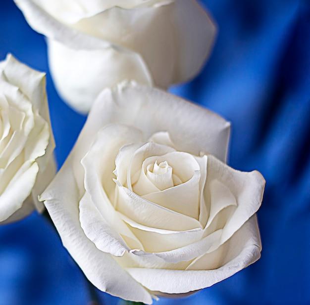 Buquê de rosas brancas em um fundo azul