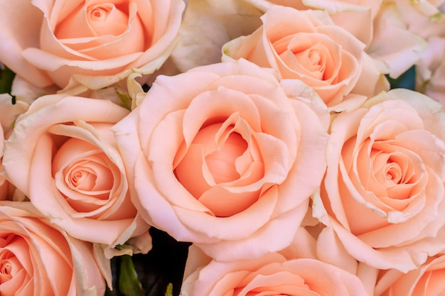 Buquê de rosas delicadas. um fundo de rosas florais. flores bonitas. um presente para o feriado. flores frescas.