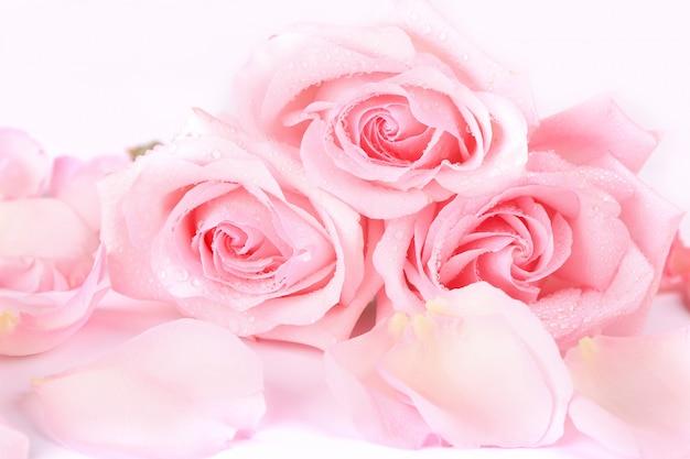Buquê de rosas rosa pálidas com pétalas sobre um fundo claro
